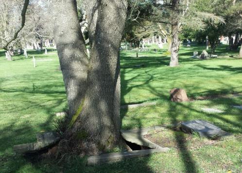tree graVE