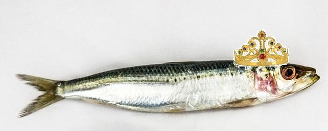 sardine queen